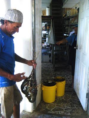 Fantastic Seafood At Hotel Boca Brava