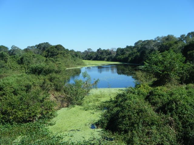 The Pantanal Wetlands of Brazil