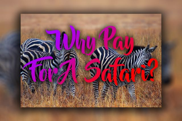 Why Pay For A Safari