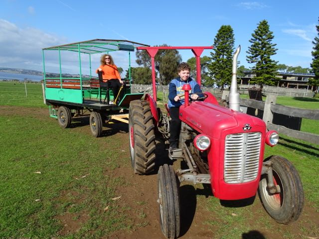 Top things for families on Phillip Island