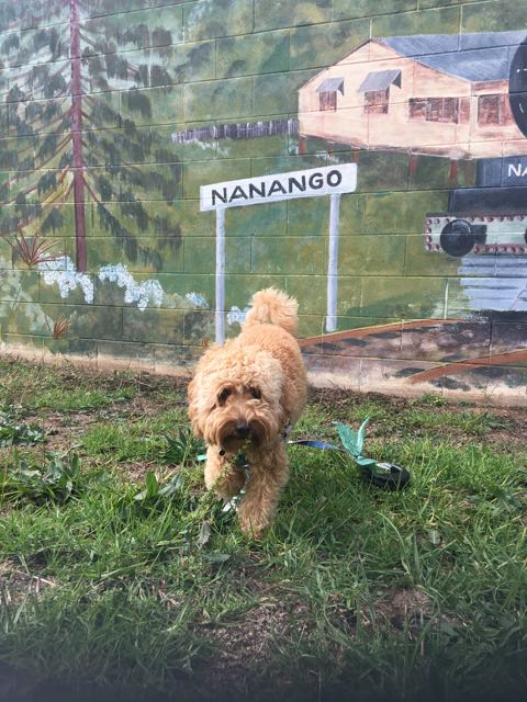 Dog-friendly accommodation - Nanango